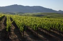 Le vignoble californien E&J Gallo mise sur les données