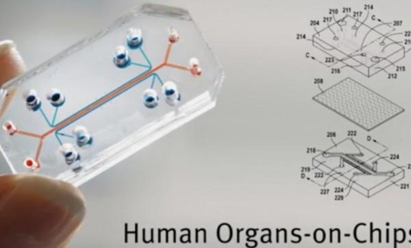 Des chercheurs de Harvard ont am�lior� l'impression 3D de tissu humain sur puce avec des capteurs remontant des informations vitales.
