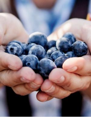 Démo IBM Food Trust : expérimentez le pouvoir de la Blockchain pour améliorer l'efficacité de votre chaîne d'approvisionnement