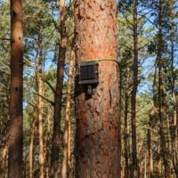 Avec ses capteurs IoT, la start-up allemande Dryad veut aider à prévenir les incendies de forêt. (Crédit Dryad Networks)