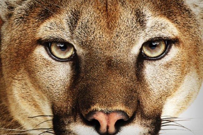 La première mise à jour de Mountain Lion disponible