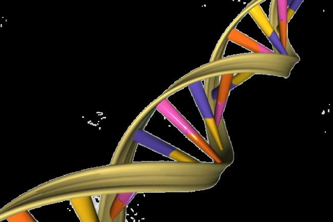 Un test ADN très rapide va équiper le FBI