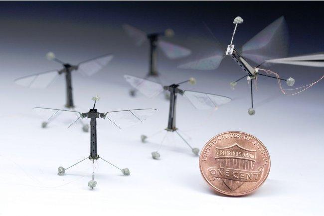 Le poids du robot insecte montré par Harvard pèse un trentième environ d'une pièce d'un penny américain. (cliquer sur l'image pour l'agrandir). Crédit : Kevin Ma and Pakpong Chirarattananon, Harvard University.