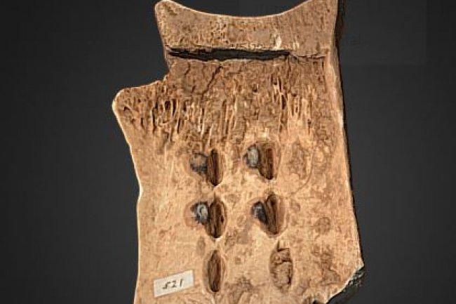 L'impression 3D d'un vestige vieux de 3000 ans permet de manipuler l'objet sans risque. (crédit : Cambridge University Library)