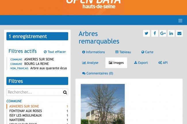 «Arbres remarquables», l'un des jeux de données les plus téléchargés du site Open Data des Hauts-de-Seine, s'est enrichi de photos. (crédit : D.R.)
