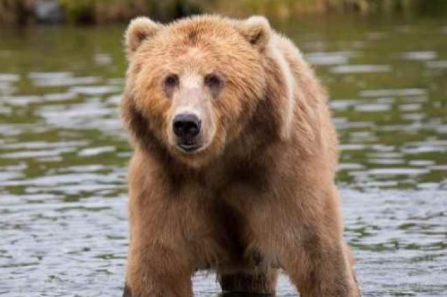 La DSI peut être comme un ours selon Sungard AS : en hibernation un jour, très agressive sous la pression un autre. Il faut l'apprivoiser. (crédit : Skeeze / Pixabay)