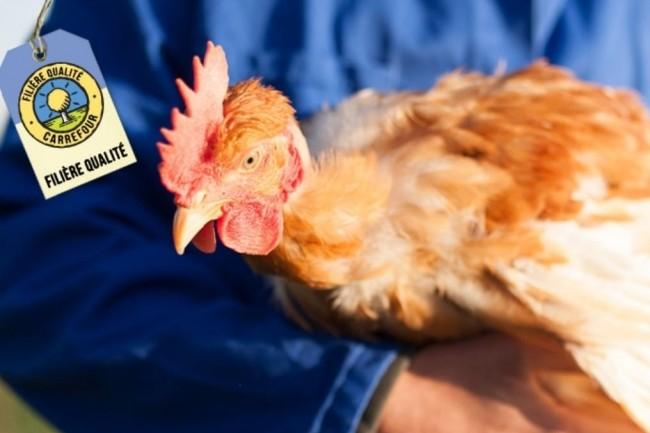 Pour l'instant, Carrefour a limité son projet de traçabilité blockchain à la filière qualité de ses poulets fermiers d'Auvergne mais 7 autres filières seront concernées dans les prochains mois. (crédit : Carrefour)