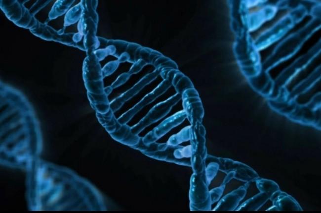 « Notre analyse approfondie est en cours et nous informerons toute personne potentiellement concernée, le cas échéant, en vertu de la législation applicable », a prévenu Veritas Genetics après le piratage informatique qu'elle a subie. (crédit : PublicDomainPictures)