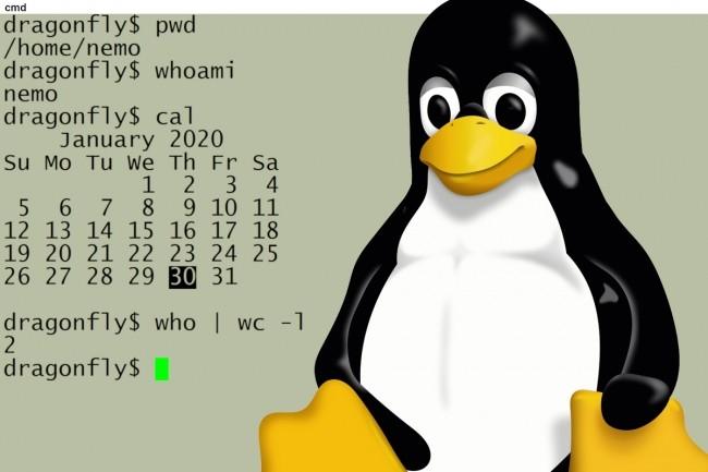 La ligne de commande permet d'utiliser plus rapidement certaines fonctionnalités de Linux. ( Crédit Sandra Henry-Stocker / LinuxCC0)