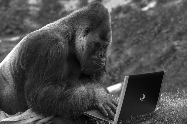 L'outil Chaos Monkey de Netflix a bien évolué depuis sa création, mais il est toujours considéré comme important dans l'ingénierie du chaos. (Crédit Photo: Pixabay)