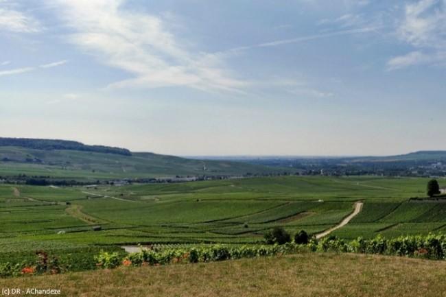 Le centre viticole champenois Nicolas Feuillatte s'appuie sur les solutions de Rubrik pour assurer la sauvegarde et la protection de ses données.