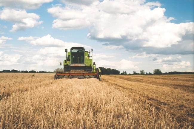 Sur l'agritech, SAP s'intéresse notamment aux innovations pouvant avoir un impact positif et durable dans l'agro-alimentaire. (Crédit : Pexels/Freestocksorg)