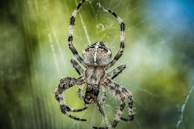 La véritable menace de Sprite Spider s'est intensifiée en juillet 2020 lorsqu'elle a commencé à cibler les hôtes ESXi. (crédit : Tama66 / Pixabay)