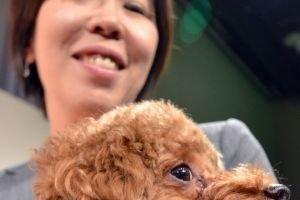 Fujitsu inaugure un podomètre pour chien relié au cloud
