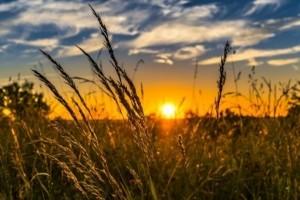 Essai réussi pour le trading de produits agricoles à la mode blockchain