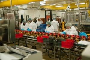 Une usine Fleury-Michon bloquée par un malware