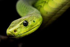 Snake, ransomware au redoutable niveau d'obfuscation