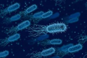 Des bactéries pour animer un réseau IoT