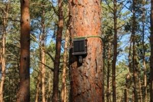Des capteurs IoT pour prévenir les incendies de forêts